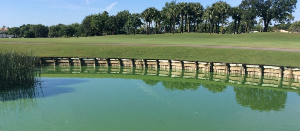 Microcystis Algae Bloom