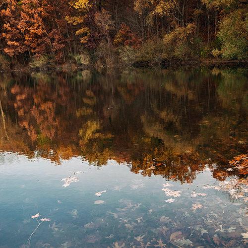 leafy lake