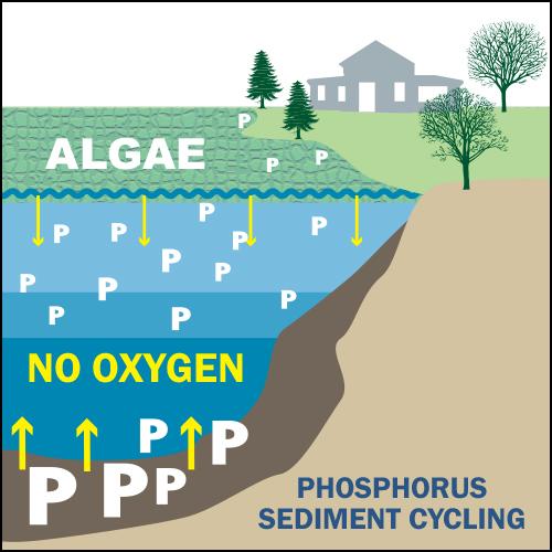 sediment phosphorus loading